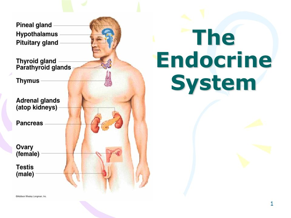 all-you-need-to-know-about-endocrine-system